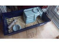 Guinea pigs and new cage