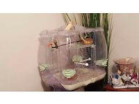 Canary for sale (singing)