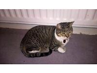 3 x Mature cats FREE to forever home (Cramlington )