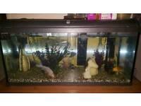 Fish fish tank