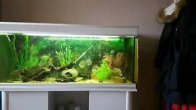 4 FT AQUALANTIS FISHTANK WITH CABINET IN SILVER /GREY