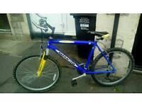 Barracuda adult mountain bike