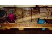 Syrian hamster and 3ft hamster cage