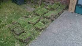 Turf Grass Soil free