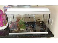 2ft x 1ft fish tank