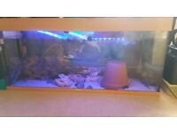 Large aquarium/fish tank for sale