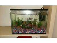 Fish tank Inc 4 fish