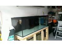 6x2x2 fish tank with sump