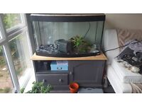 3ft fish tank with cabinet
