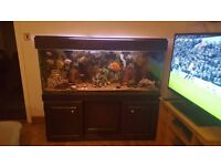 5ft Long Fish Tank with all accessories