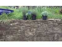 Sandstone ideal for garden rockeries or walls.