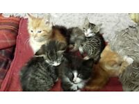 Kittens for sale SOLD