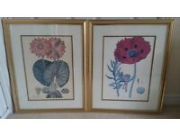 2 Gold Framed Picturs of Flowers