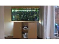Juwel Rio 300 Tropical Aquarium & Stand