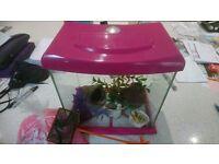 Fish tank + accessories