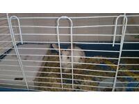 2 freindly bunnys