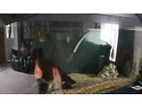 Large JEWEL bow front fish tank