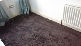 Brown shag style carpet 14'.5 x17'.3 excellent condition £25