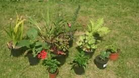 🌼💐🌺 Perennial Plant Bundle 🌹💐🌸