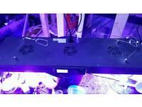 Evergrow IT2080 LEDs