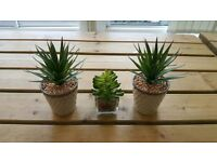 Indoor artificial plants x 3