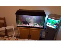 Fish Tanks for Sale with Full Setup!!