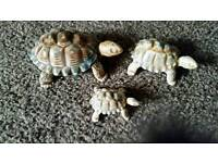 Collectable Wade Tortoises