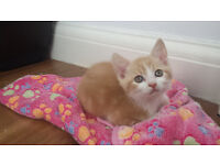 ***STUNNING CLEAN AND PLAYFULL KITTENS***