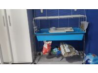 Guinea pig with cage, stand and accessories £100
