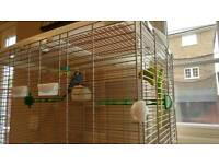 2 budgies and cage with accessories