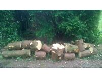 Free Firewood for Collection in Bearsden