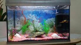 Aquarium/fishtank