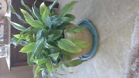 pot plant cermic pot large