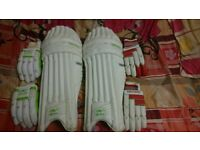 Gecko sports batting pads and gloves