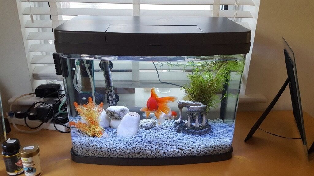 love fish panorama tank 40 litres perfect condition includes filter gravel ornaments in. Black Bedroom Furniture Sets. Home Design Ideas