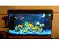 125 Litre Fluval Roma fish tank