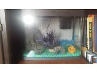 tropical/cold water fish tank