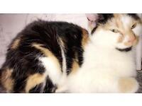 MISSING CAT IN WASHWOOD HEATH AREA
