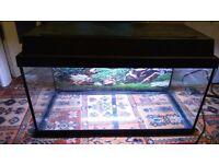 54 litre Juwel fish tank