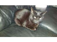 1 MALE BLACK CAT