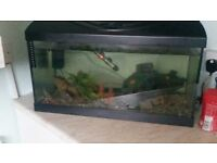 Piranhas and setup for sale