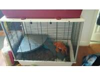 Rat cage with extras