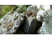 Free garden rocks for rockery