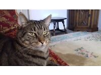 LOST. MALE TABBY - CUDWORTH S72. White Cross Estate. Dissappeared from garden Thurs 30th March.