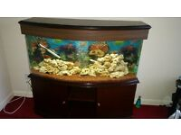 4ft Bowed Fish Tank