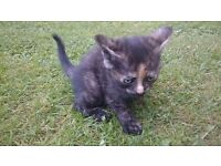 😺***** STUNNING MIX KITTENS FOR SALE *****😺