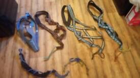 Husky harnesses