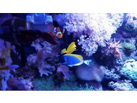 Even more corals for sale £1