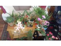Plants healthy organic in beautiful pots, Aloe Vera, succulent cactus, spider plant