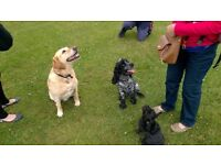 Dog walker - Helens dog walking service Brentford, Ealing, Kew, Chiswick, Mortlake, Hammersmith etc